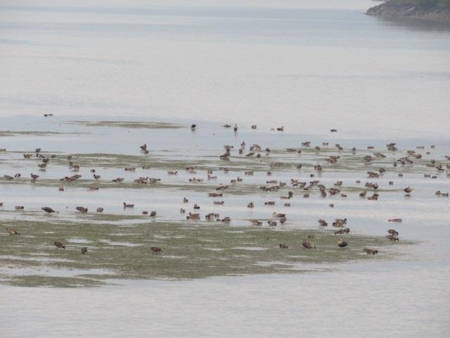 環境回復海鳥の餌場2018